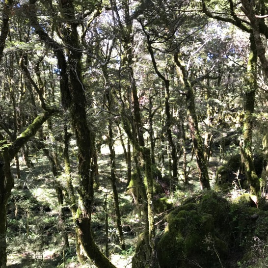 Heaphy Enchanted Forest