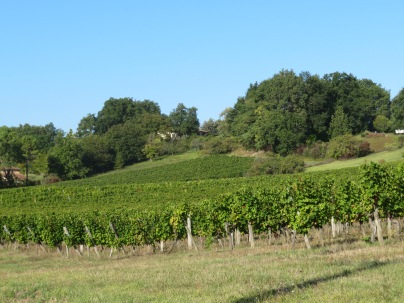 monbazillac vineyard
