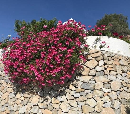 bloemen acebuchal