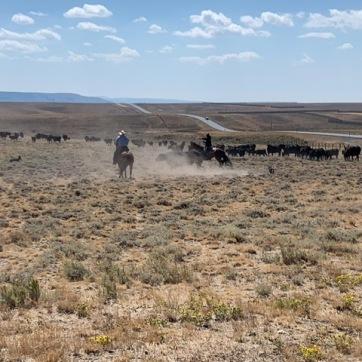 cowboy land